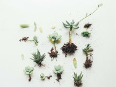 Homemade Weed Killer To Stop Weeds In Their Tracks: Looking for a safe way to get rid of weeds from growing in the garden or yard? If you are, these 15 homemade weed killer is a simple yet effective remedies. Succulent Care, Succulent Gardening, Succulents Garden, Gardening Tips, Succulent Plants, Fake Plants, Flower Gardening, Organic Gardening, Propagate Succulents From Leaves