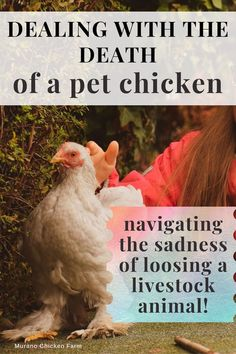 Emotions can get confusing when livestock animals become pets. Whether you consider chickens as pets or livestock, grief is still hard to deal with when a farm animal dies and many times outsiders find that hard to understand....which doesn't mean the grief is any less real! Here's what happened when I lost my favorite chicken. Cute Chickens, Raising Chickens, Chickens Backyard, Chicken Story, Chicken Pictures, Chicken Humor, Losing A Pet, Livestock, Farm Animals