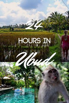 Ubud is a town in the centre of Bali, famous for its surrounding green rice fields and sacred Monkey Forest. Come find out the best things to do and see if you're only visiting on a day trip!