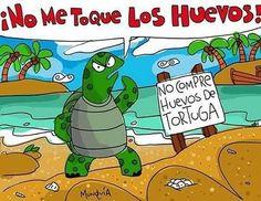 @Regrann from @bellaloramargarita -  No compre huevos de Tortuga Protejamos esta especie en peligro de extinción  #bellaloramargarita #vida #especie #Regrann