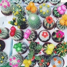 I want all the cute plants Cacti And Succulents, Cactus Plants, Garden Plants, Indoor Plants, House Plants, Cactus E Suculentas, Plants Are Friends, Terrariums, My Flower