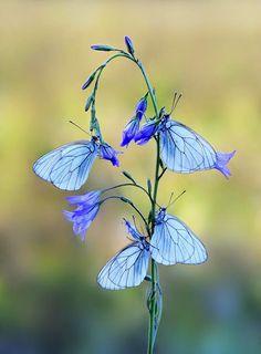 En la profundidad del Bosque: Mariposas