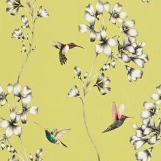 Amazilia (111061) - Harlequin Wallpapers - A beautiful design of etched trailing flowers with vivid coloured amazilia hummingbirds. Shown here in green, grey and pretty multicoloured birds. Other colour ways available. Paste the wall product. Wide width roll. Please request a sample for true colour match.