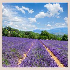 Active Ingredient, The Balm, Vineyard, Lavender, Essential Oils, Skin Care, Nature, Outdoor, Instagram