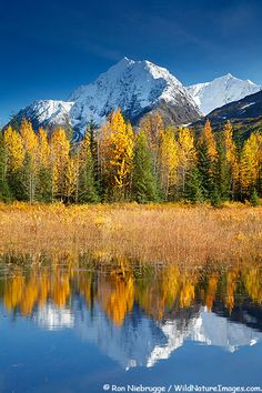 Autumn in Alaska, Kenai Peninsula, Chugach National Forest, Alaska