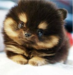 How adorable!! Who wants one??