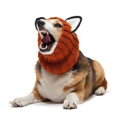 "- Orange ""Fox"" dog snood with large black & white ears - 100% acrylic yarn - Available in small, medium, and large sizes - Pictured: medium size on a 30 lbs corgi, 16"" head Show your pooch how much yo"