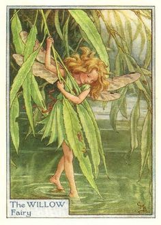 Cicely Mary Baker (1895-1973) Illustration of the Willow Fairy for Flower Fairies of the Garden.