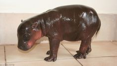 I have always wanted a hippo for a pet.... Odd of me?!