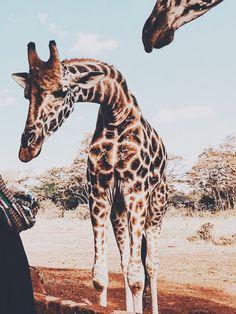 Pin by Makenzie Hodde on Animals Cute Creatures, Beautiful Creatures, Animals Beautiful, Nature Animals, Animals And Pets, Wild Animals, Cute Baby Animals, Funny Animals, Animal Photography