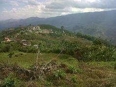 Taparca vereda de Belen de Umbría. Risaralda, Colombia.