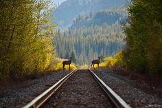 Национальный парк Банф - Путешествуем вместе