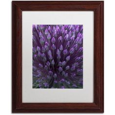 Trademark Fine Art Alien Flower Pods Canvas Art by Kurt Shaffer, White Matte, Wood Frame, Size: 16 x 20, Brown