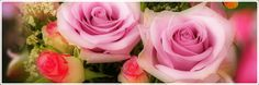 Free Image on Pixabay - Rosa, Roses, Pink Lilac Free Pictures, Free Images, Beste Mama, Lilac, Pink, Flowers, Plants, Special Gifts, Rose