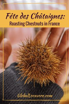 In Southern France, I get to experience a local custom when I'm invited by a local family to forage for chestnuts and attend a community chestnut roast. Travel Around Europe, Europe Travel Guide, France Travel, Travel Tips, Travel Destinations, Solo Travel, Travel Guides, Culinary Classes, Cooking Classes