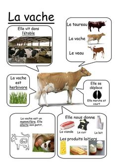Vache - Animaux de la ferme animals silly animals animal mashups animal printables majestic animals animals and pets funny hilarious animal Teaching French, French Education, Kids Education, How To Speak French, Learn French, French Classroom, French Resources, French Lessons, Infant Activities