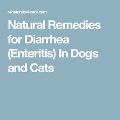 Natural Remedies for Diarrhea (Enteritis) In Dogs and Cats
