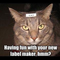 Label maker obsession.