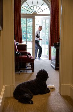 Bo, the Obama family dog, waits to greet President Barack Obama in the Outer Oval Office, June 11, 2013.