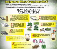 How to capture, cultivate, preserve, and use Indigenous Microorganisms - IMO - using the techniques of Korean Natural Farming. Using materials readily at home or off of the grocery store shelf I will demonstrate step by step the process. Indigenous Microorganism are collected and used to re-populate the soil's micro-sphere and the plant's surfaces - bringing them back into balance. This balance serves as the foundation for a healthy soil biology, productive nutrient recycling...