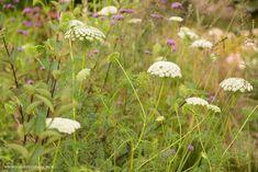 Aminek poleca się na rabaty - Ogrodowa Pasja Plants, Plant, Planets