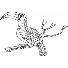 coloring sheet bird in nest coloring pages of baby birds in nest