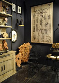 murs noir et éléments naturel, déco esprit cabinet de curiosités