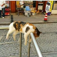 from Unknown ~ double tap Shop for Cat Lovers bio Funny Cats, Funny Animals, Cute Animals, Funniest Animals, Funny Minion, Funny Humor, Chat Bizarre, Gatos Cats, Photo Chat