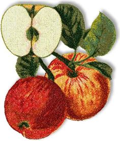Advanced Embroidery Designs - Apples