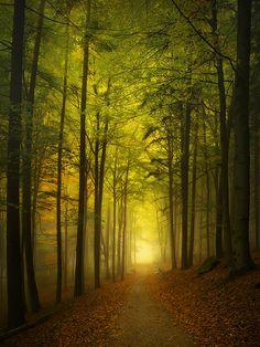 Beech Trail by Kilian Schönberger, via 500px
