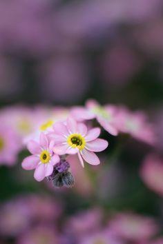 """cosmofoto66: """" Blume…. eine männlich (sieht man ja) """""""