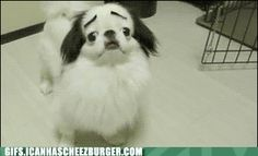 I will never love the eyebrows.    Gif your butt (!) over to Animal Gifs for MOAR cyoot and funneh on loop!                Submitted by:  Unknown                            Tagged:    category:Image  ,  dogs  ,  eyebrow  ,  eyebrows  ,  gif  ,  spin  ,  weird  ,  wtf      Share on Facebook