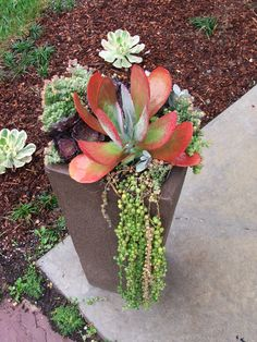 Front Yard Planter with Flapjack