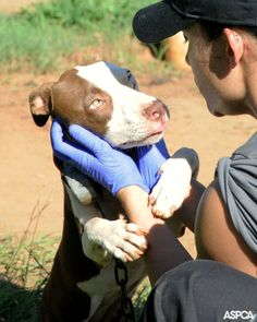April is Prevention of Cruelty to Animals Month.  Learn how you can help: http://www.aspca.org/blog/join-us-celebrating-prevention-cruelty-animals-month.