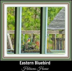 Hibiscus House: Bluebirds to blooms