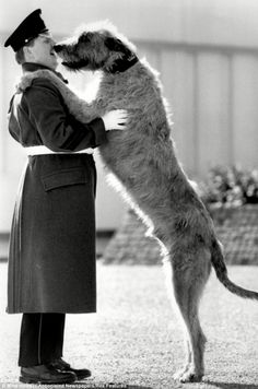 A member of the Irish Guards with an Irish Wolfhound in 1987.