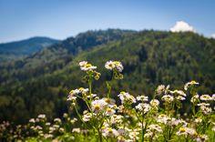 Die wunderschöne Natur im Schwarzwald bei Bad Herrenalb.