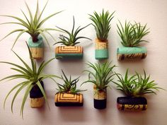 Wine cork and tillandsia pairings for Mother's Day gifts. Ingredients: T. albertiana, T. concolor, T. ionantha, repurposed wine bottle corks, neodymium magnets, paint