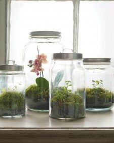 """How to Make the Perfect Terrarium (and Keep It Alive!) WOODLAND TERRARIUM: """"It may be gray outside, but it's always green in these moss terrariums. Decor Terrarium, Terrarium Cactus, Build A Terrarium, How To Make Terrariums, Terrarium Wedding, Terrarium Containers, Terrarium Table, Storage Containers, Mason Jar Terrarium"""