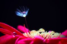 Waterdrop on a flower by Kou Ayumu on 500px