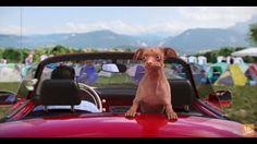 Tuna, Labrador Retriever, Humor, Dogs, Youtube, Animals, Search, Labrador Retrievers, Animales