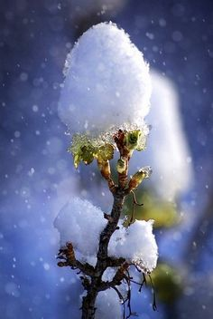 Winter Szenen, I Love Winter, Winter Magic, Winter Time, Winter Season, Art Blanc, Winter Songs, Photo D Art, Winter's Tale