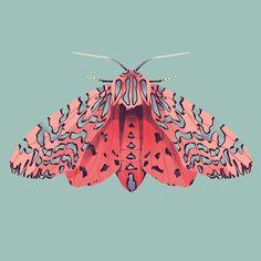 Moth illustrations by Jelena Hallmann-Haeschke . More of Jelena's work at Moth illustrations by Jelena Hallmann-Haeschke . More of Jelena's work at Illustration Papillon, Art Et Illustration, Botanical Illustration, Butterfly Illustration, Beautiful Bugs, Insect Art, Art Design, Art Inspo, Art Reference