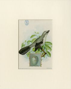 "1898 Mocking Bird Print from the American Singer Series Sewing Machine Song Bird Card Set - J.L. Ridgway Antique Bird Print Matted 8x10"" by AntiquePrintBoutique on Etsy"