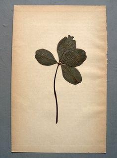 maison paulette - 4-leaf clover