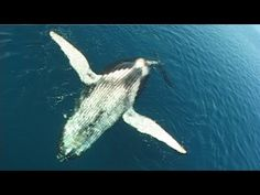 Whale Song - YouTube