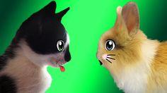 Кролик БАФФИ и КОТ МАЛЫШ ! СПИННЕР кролика БАФФИ  !  Детский Канал А ну-ка Давай-ка видео для детей ! Кролик Баффи и Анюта с канала Анука Давайка передают всем огромный привет и хотят познакомить со своим новым другом КОТ МАЛЫШ ! КОТ МАЛЫШ  очень хочет познакомится с кроликом Баффи и подружится с ней. В новой серии на канале #анукадавайка вы посмотрите как кот малыш пришел в гости к кроля Бафи. У всех у кого есть свой котик или кошечка пишите в комментариях их клички а кто хочет может…