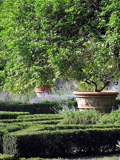 Landscaping: French potted garden, Provence style. The French: they care nothing for details! :p
