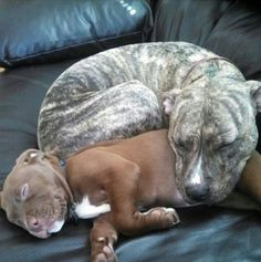 Too much cute for one couch!!