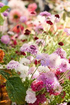 farmer's market flowers. #splendidsummer Beautiful Flowers, Planting Flowers, Summer Flowers, Amazing Flowers, Farmers Market Flowers, Flower Stands, Grasses Landscaping, Flower Field, Green Flowers